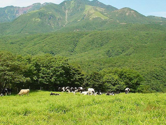 霧降高原牧場(日光市) 県西エリア 霧降高原牧場の玄関口にある県有牧場で、主として乳用牛が放牧さ